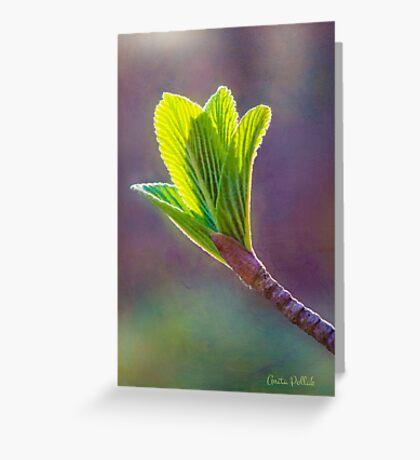 Spring at Last - Baby Siebold Viburnum Leaves Greeting Card