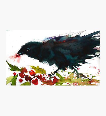 Christmas Crow Photographic Print