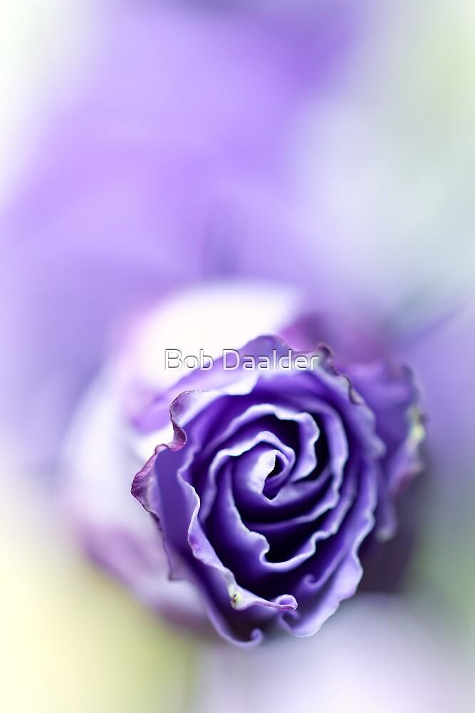 Purple breeze.... by Bob Daalder