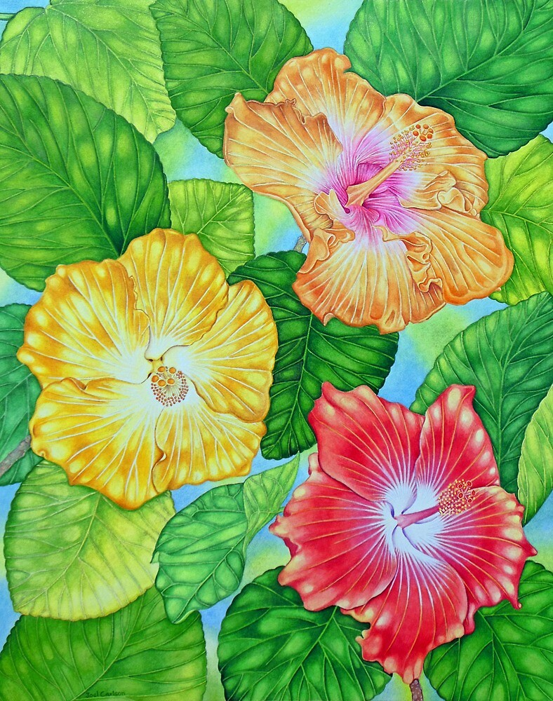 Hawaiian Hibiscus by joeyartist