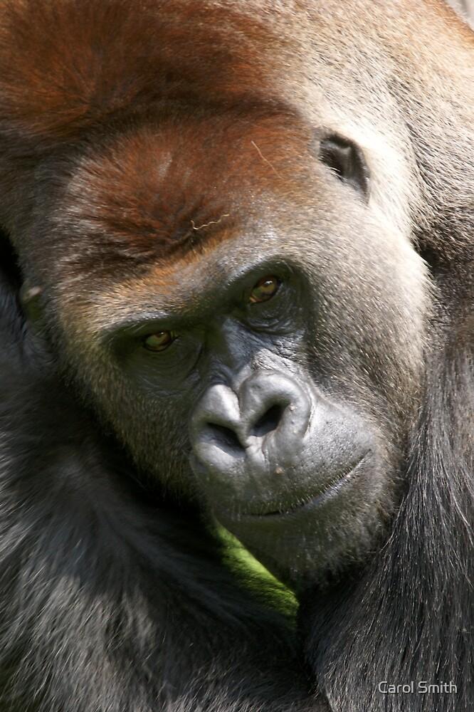 Gorilla  by cs-cookie