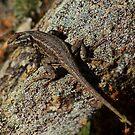 Reptilian by Arla M. Ruggles