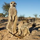 Two meerkats by Anthony Brewer