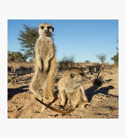 Two meerkats Photographic Print