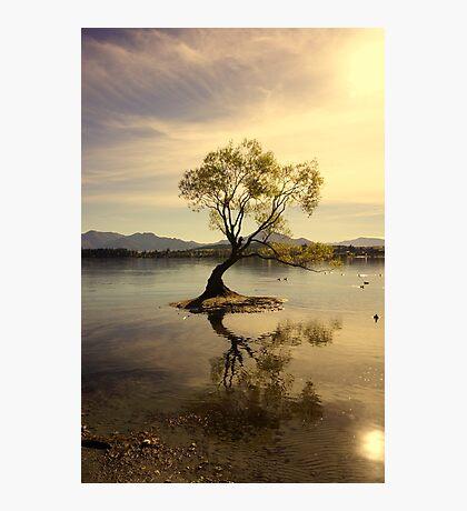 A Tree Alone Photographic Print