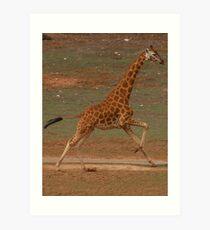 Run Giraffe Run Art Print
