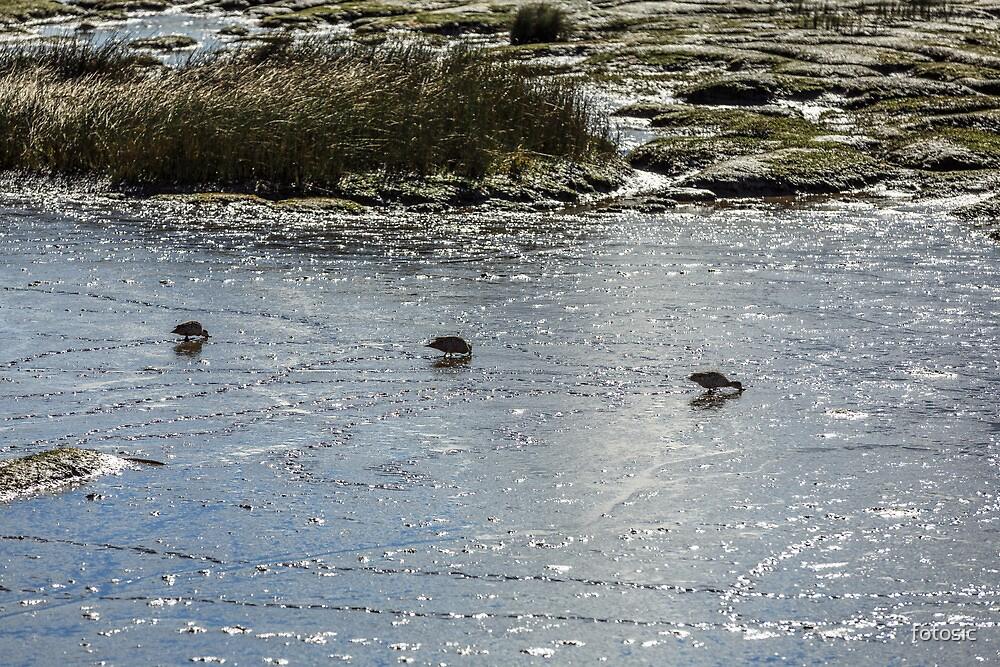 Ducks in Mud by fotosic