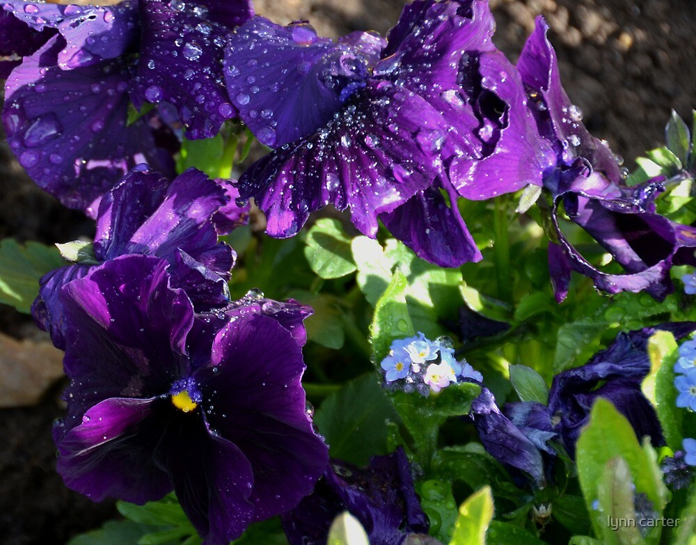 April Showers -Lyme.Dorset.UK by lynn carter