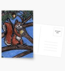 Squirrel In The Forest Postcards