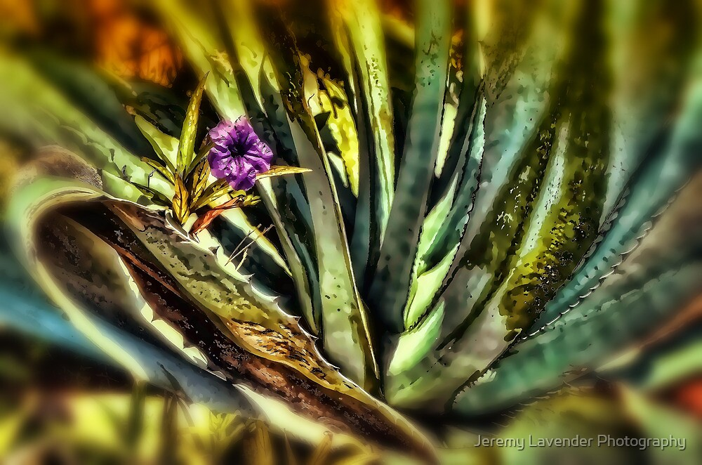 Nature Abstract by Jeremy Lavender Photography