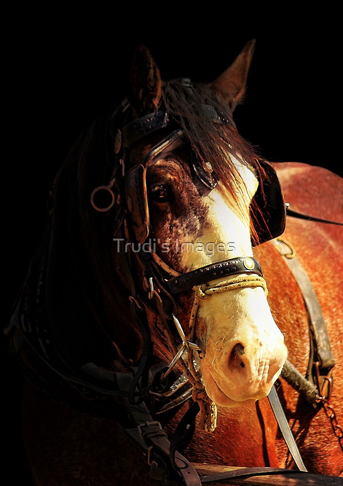 Age of Grace by Trudi's Images