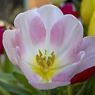 The Heart of a Tulip by Mikell Herrick