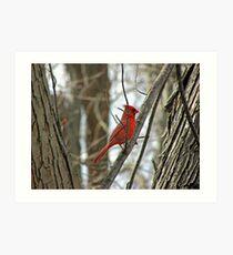 Royal Redbird Art Print