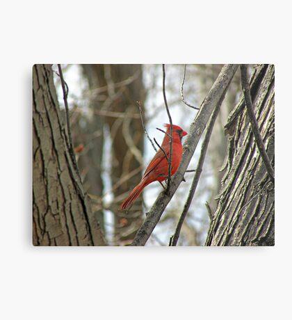 Royal Redbird Metal Print