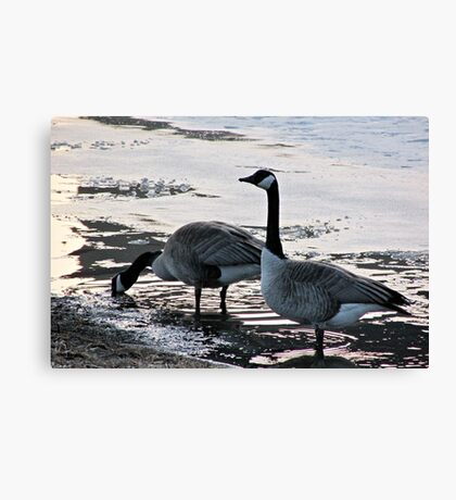 Free Ice Water Canvas Print