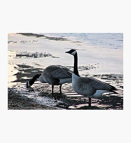 Free Ice Water Photographic Print