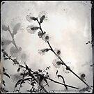 Flowering and Her Reflection by Jennifer Hartnett-Henderson