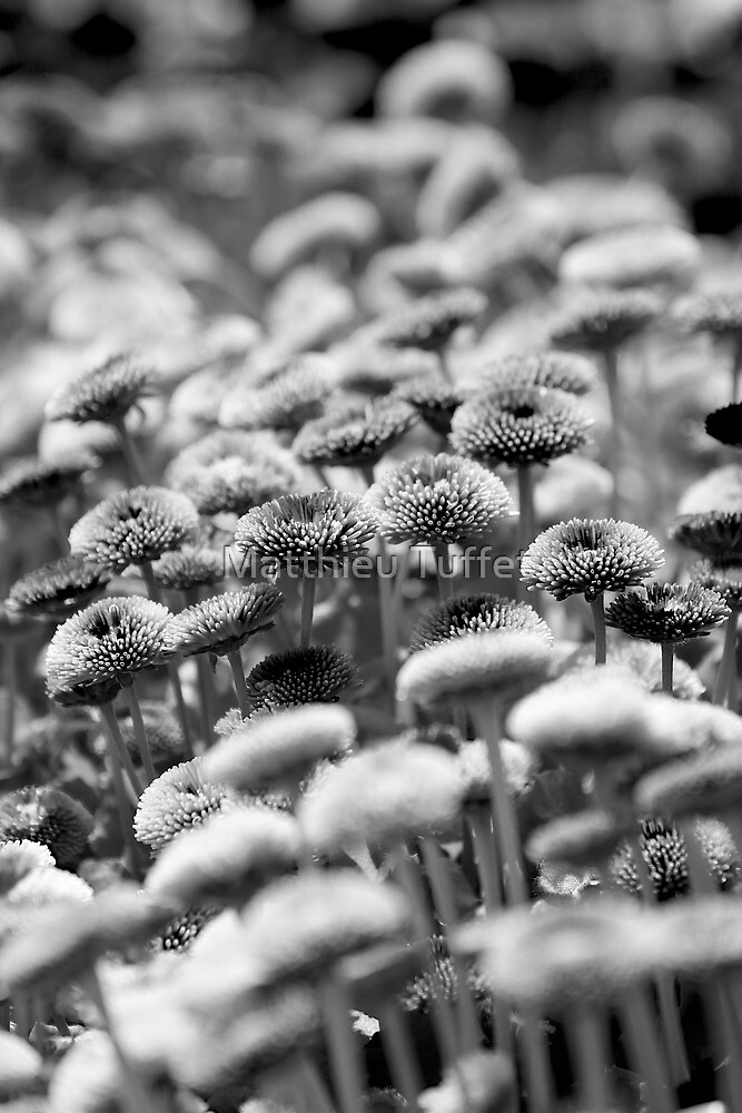 flower bed by parisiansamurai