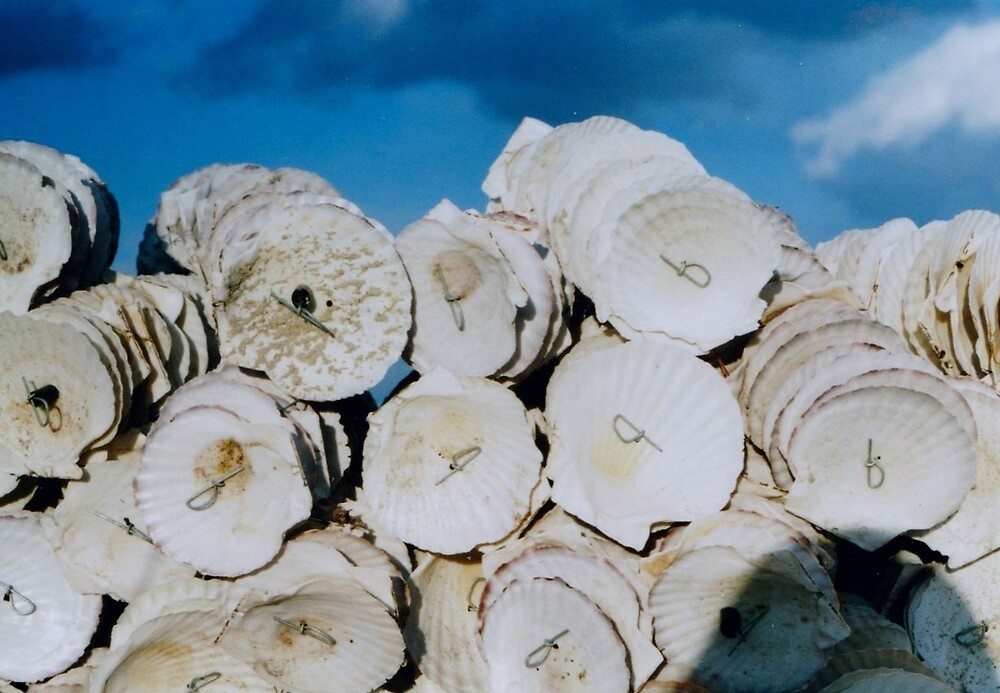 shells by juliaweston