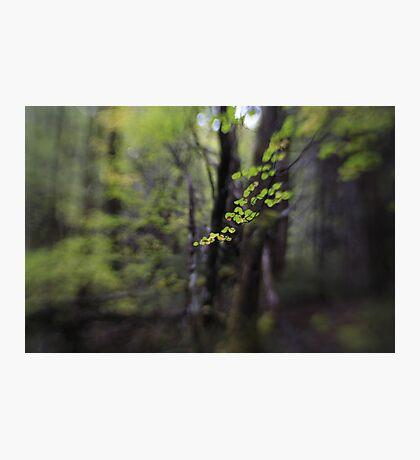 Hounslow Photographic Print