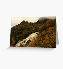 Fagus on the Mountain Greeting Card