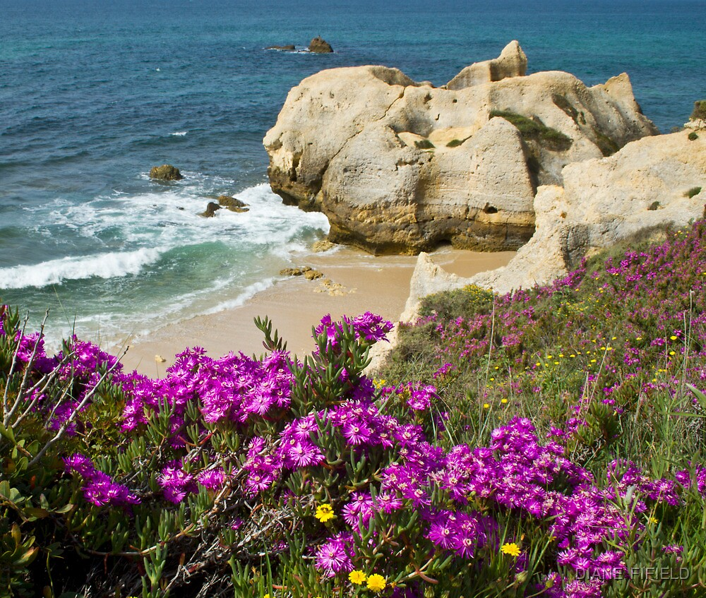 Wild on the Cliffs  by DIANE  FIFIELD