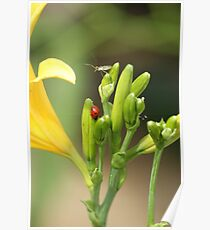 NATURES BEAUTY Poster