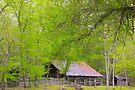 Ozark Living,  Historic Jim Villines boyhood home, by NatureGreeting Cards ©ccwri