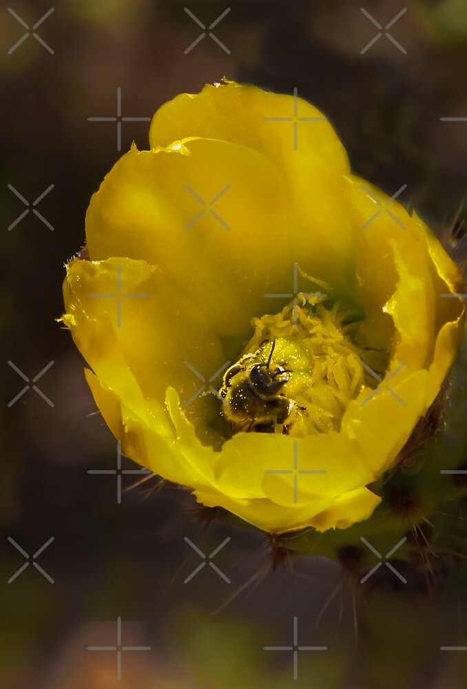 Bumbly in the Cactus Bloom! by Heather Friedman