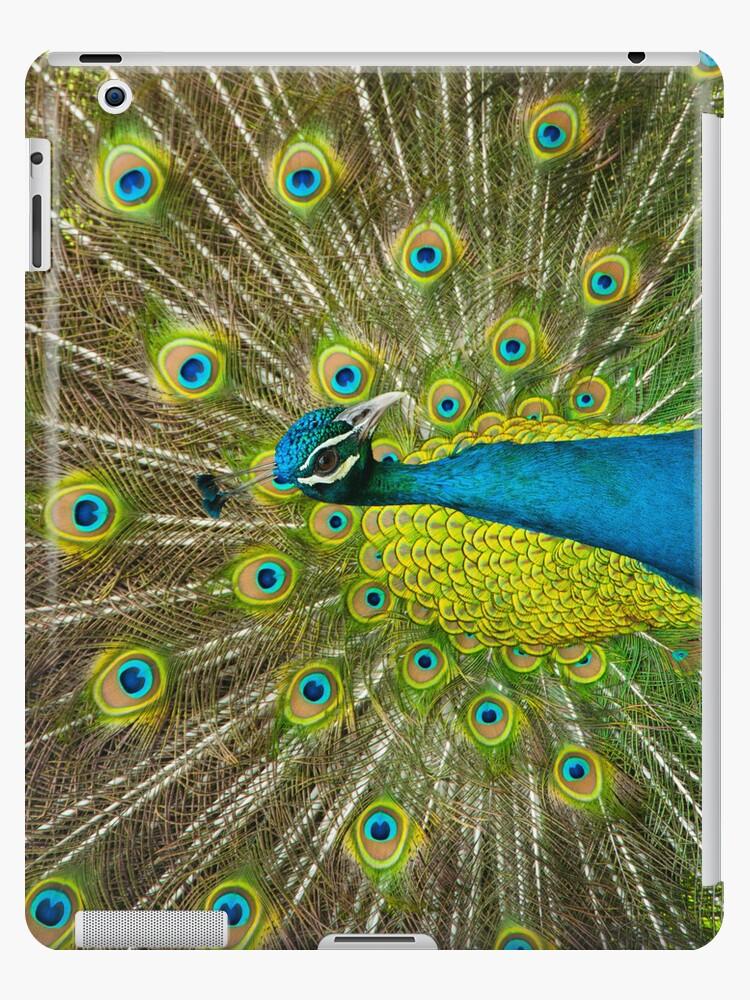Peacock by zinchik