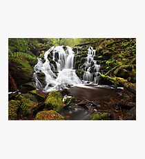 Rainforest rewards  Photographic Print