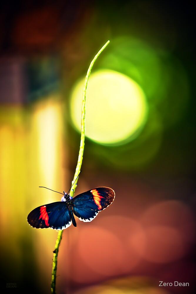 Key West Butterfly by Zero Dean