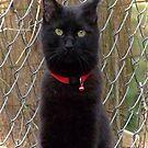Portrait of a Black Cat by Terri Chandler
