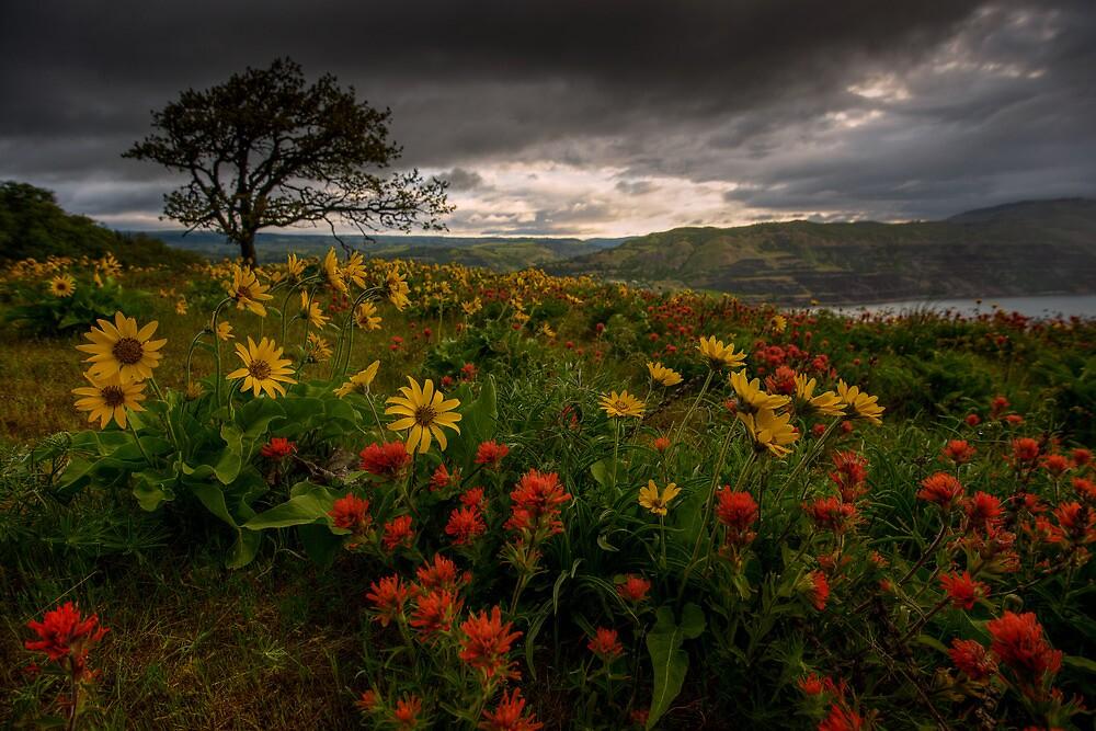 Flower Power by Dan Mihai