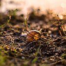 It's a small world by Biren Brahmbhatt
