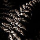 A Study in Harvesting Light by WhiteLightPhoto