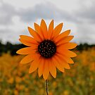 PhotoSyntheSunflower by WhiteLightPhoto