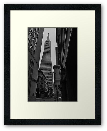 TransAmerica Pyramid, San Francisco, CA by WhiteLightPhoto