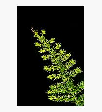 Fern, Fern, Asparagus Fern Photographic Print