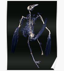 Crow Skeleton Poster
