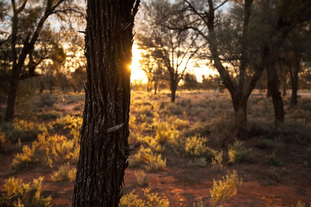 Sunset over desert landscape by Jess Gibbs