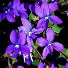 1482-beauty violet by elvira1
