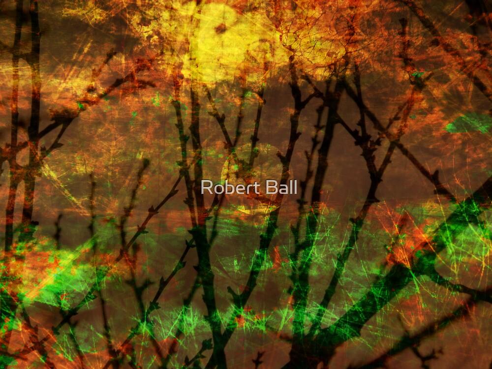 Strange Lights by Robert Ball