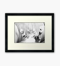 Kitten playing Framed Print