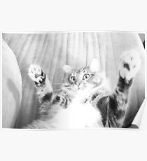 Kitten playing Poster