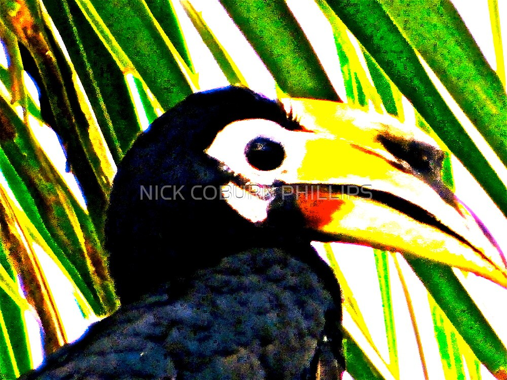 THE COLOURS OF BORNEO by NICK COBURN PHILLIPS