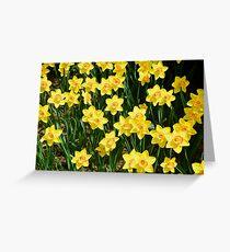 A Sea of Daffodils Greeting Card