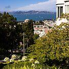 San Francisco Bay by mlphoto
