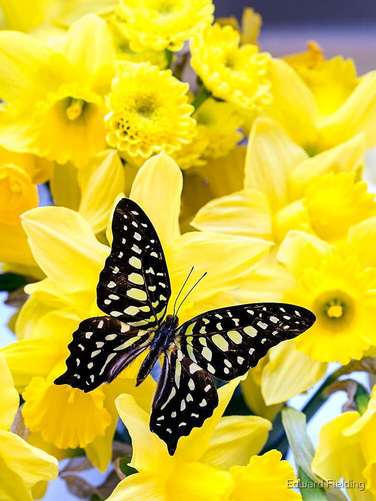 Butterfly and Daffodils by Edward Fielding