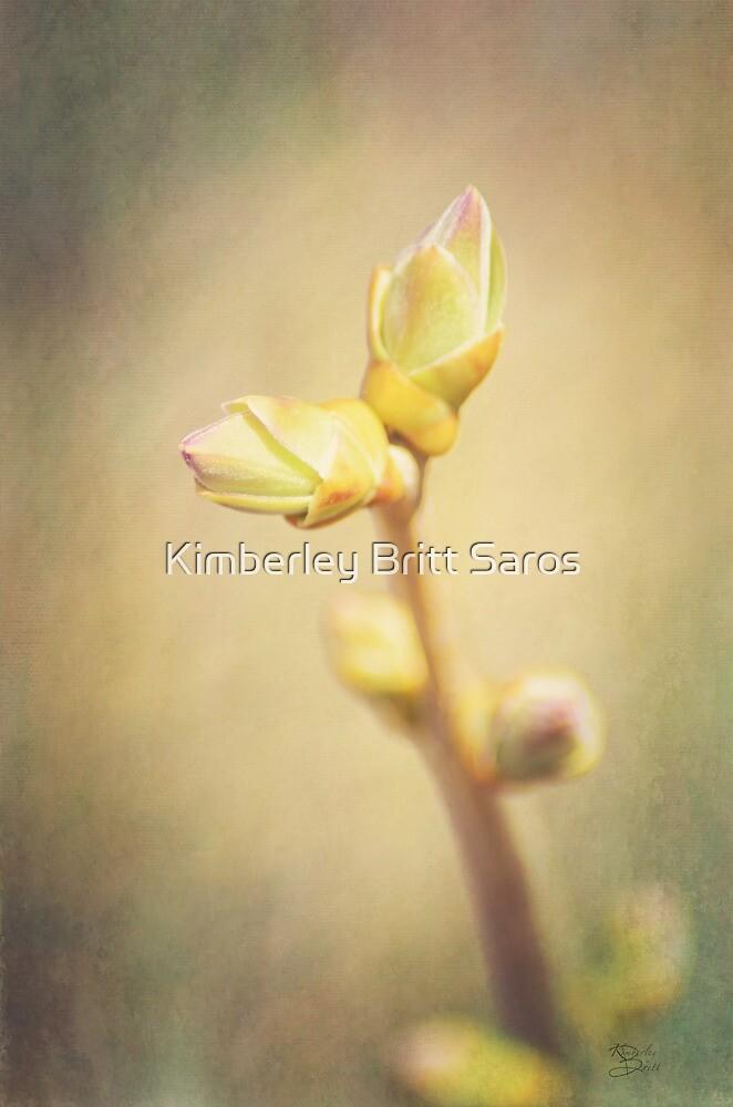 New Beginnings by KBritt
